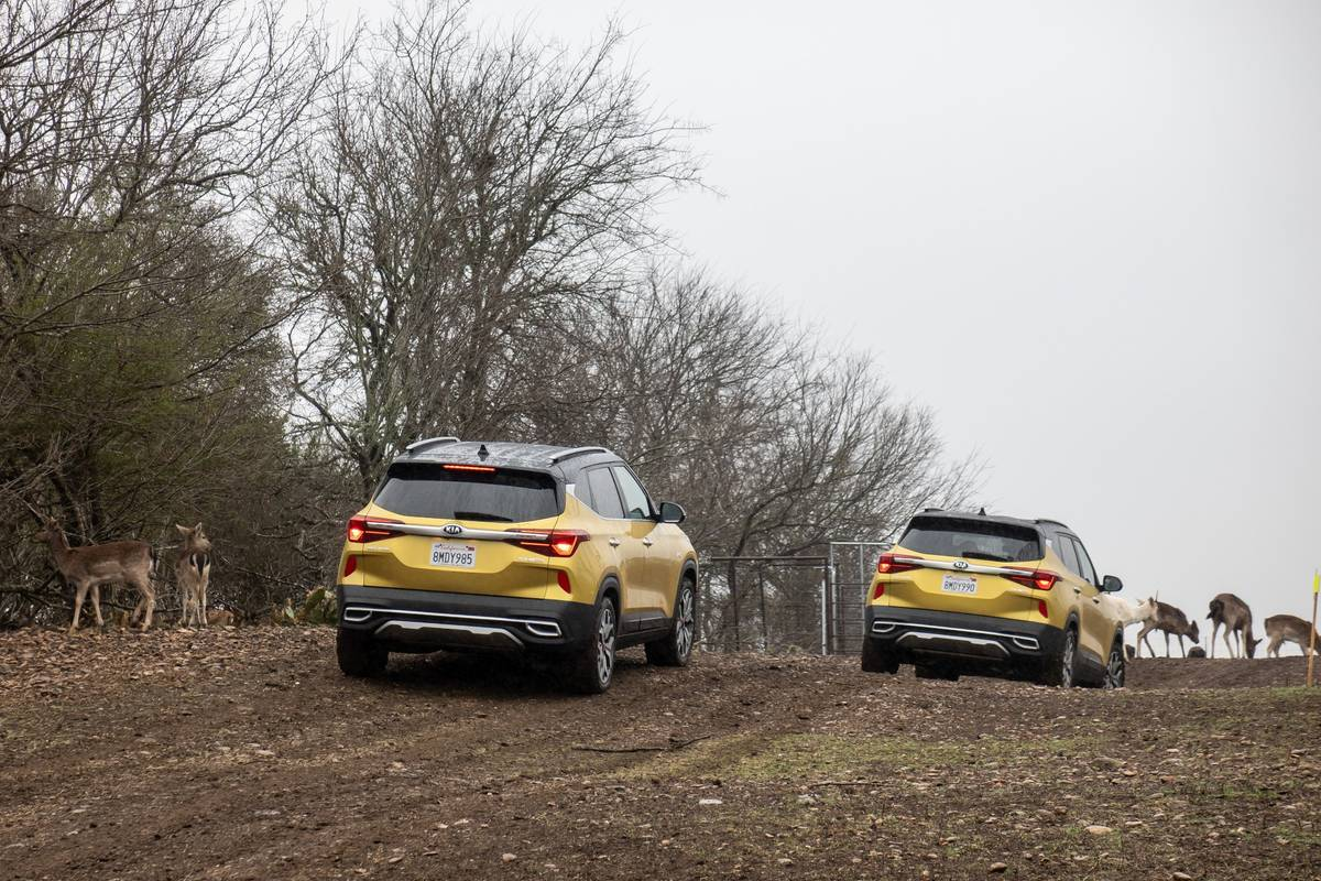 kia-seltos-2021-21-exterior--gold--group-shot--nature--off-road--outdoors--wide.jpg
