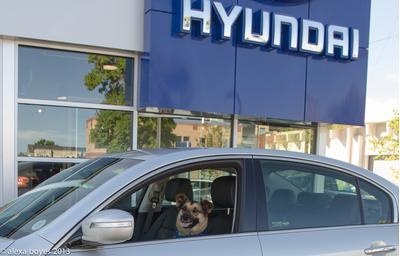 Boulder Hyundai Image 7